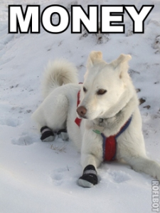 Money, the Booty Wearing Dog